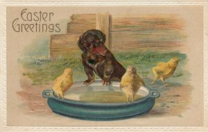 EASTER Greetings, 1900-10s; A Dachshund and chicks at large bowl of water