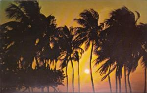 Florida Miami Beautiful Sunrise