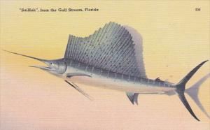 Sailfish From The Gulf Stream Florida
