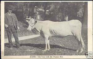 Jessie, The Cow with the Human Skin (1907)
