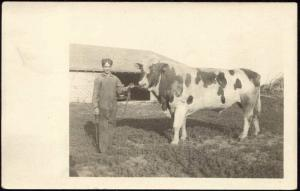 American Farm Boy Shows Bull, Cow (1920s) Real Photo