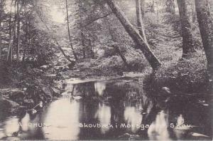 Skovbaek i Moesgaard Skov, Aarhus, Denmark, 1900-1910s