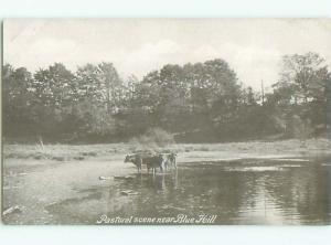 Unused Pre-1907 COWS IN THE WATER NEAR BLUE HILL Mamaroneck New York NY Q1508