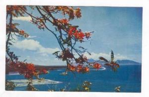 Aerial View, Moorea de Haapape, Tahiti, 60-70s