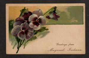 IN Greetings from MAYWOOD INDIANA Postcard PC Pansies