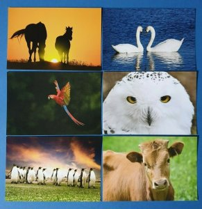 Set of 6 NEW Animal Wildlife Postcards, Penguin, Cow, Parrot, Owl, Swan, Horse