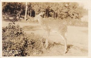 RP, Deer, Turtle Lake Resort On Johnson, WINCHESTER, WI, 1910-20s