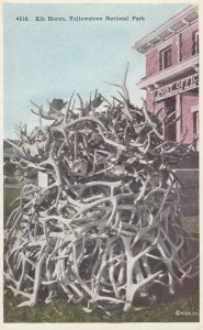 YELLOWSTONE National Park , 1900-10s ; Elk Horns at Post Office