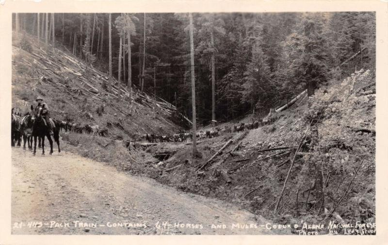 COEUR d'ALENE NATIONAL FOREST ID~64 HORSE-MULE PACK TRAIN~REAL PHOTO POSTCARD
