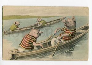 264623 ROWING SPORT Dressed PIG in Boat Vintage Color postcard