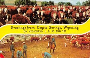 Coyote Springs Wyoming Greetings Cows Ranch Cowboys Postcard JE229724