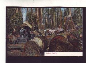 P1637 old unused postcard logging felling timber huge trees
