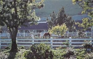 USA California Madonna Inn, San Luis Obispo Grazing Horses