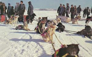 Indian Dog Teams , Yellowknife Bay , Yellowknife , N.W.T. , Canada , 50-60s