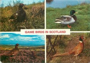 Game birds in Scotland multi views postcard