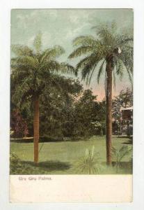 Gru Gru Palms, Bermuda, 00-10s