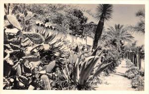 California San Diego  Cactus Garden, Ramona´s Marriage Place RPC