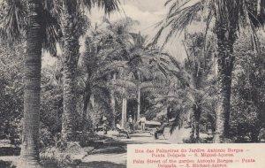 Azores , PORTUGAL , 00-10s ; Rua das Palmeoras do Jardin Antonio Borges
