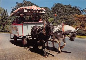 Canada The Tallyho Victoria The City of Flowers Carriage Horses