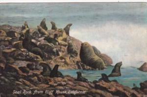 Seal Rock From Cliff House California 1909