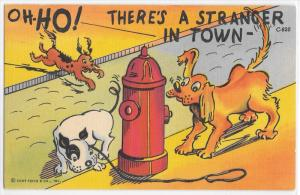 Oh Ho Stranger in Town Dog Running Sniffing Fire Hydrant Comic Curteich Postcard