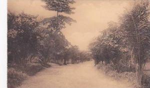 Belgian Congo Un coin de la plantation de Kiniati au Mayumbe