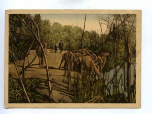 195991 JORDAN watering place CAMELS Vintage postcard