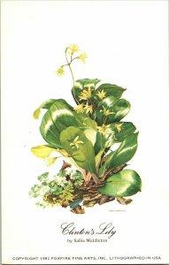 Clinton's Lily by Sallie Middleton Vintage Postcard