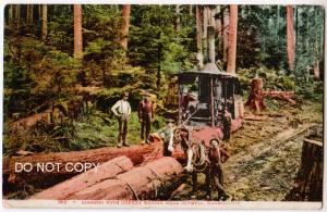 Logging with Donkey Engine, Olympia WA