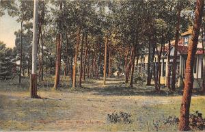 White Lake Michigan~San Juan Cottages in Woods~Rough Path~1908 Postcard