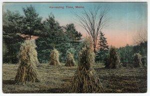 Harvesting Time, Maine
