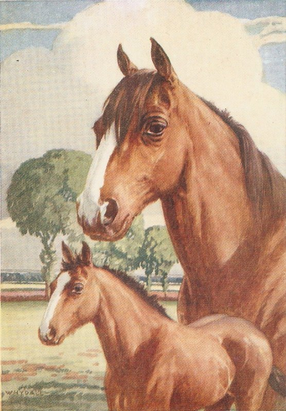 Whydale. Mare and Foal  Nice vintage Salmon postcard