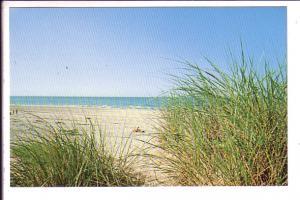 Beach, Cape Cod, Massachusetts,