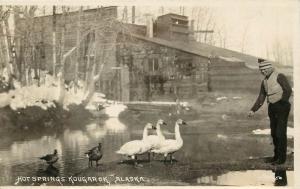 c1910 RPPC Man Feeds Swans at  Pilgrim Hot Springs Kougarok AK Dobbs Photo