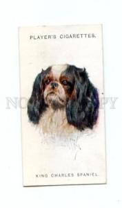 166925 KING CHARLES SPANIEL WARDLE CIGARETTE card ADVERTISING