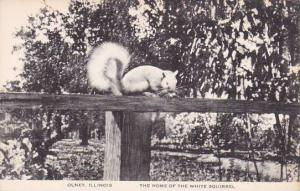 Illinois Olney The Home Of The White Squirrel Artvue