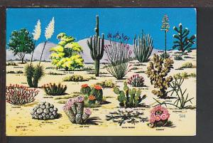 Cacti and Desert Flora of Great Southwest Postcard BIN