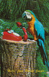 Florida Miami Zena The Macaw On Telephone Parrot Jungle Red Road