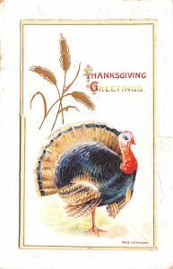 Turkey pulls opens Thanksgiving  tear right edge
