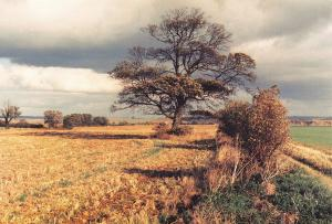 Postcard Rural Landscape, Burton Upon Stather, Scunthorpe, South Humberside #B