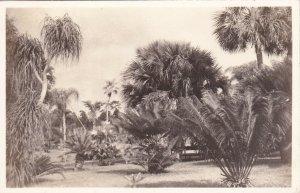 RP: COCONUT GROVE , Florida, 30-40s; Fairchild Tropical Garden