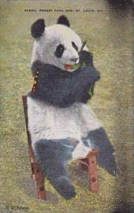 Panda Bear Forest Park Zoo Saint Louis Missouri