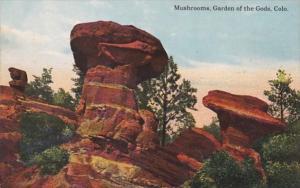 Colorado Mushrooms In Garden Of The Gods