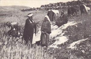 Palestine Field Of Boaz East Of Beit Sahur