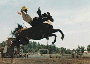 CALGARY, Alberta,1950-60s; Calgary Exhibition And Stampede - Bareback Bronc R...