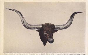 The Largest Steer Horns in the World,  Albert's Buckhorn Saloon,  San Antonio...