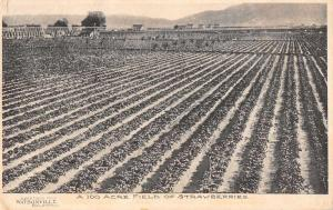 Wastonville California Strawberry Field Antique Postcard J71334