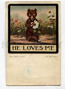 3029297 TEDDY BEAR Camomile FORTUNE TELLING old Art