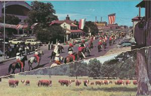 Old Town Parade, Cattle, FORT WORTH, Texas, 40-60´s