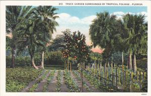 Florida Truck Garden Surrounded By Tropical Foliage Curteich